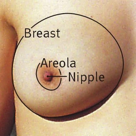 Weibliche_brust_en