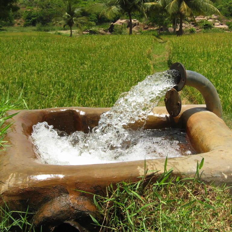 """Die Deutschen lehnen """"Wasser als Menschenrecht"""" ab Wasser_Reisfeld_Indien"""