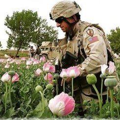 Dank USA: Afghanistan wieder führende Drogenregion