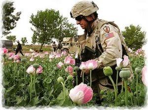 USA werden Afghanistan umfassend begrünen Dank USA: Afghanistan wieder führende Drogenregion