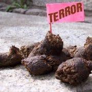 Terror Scheisse Bullshit Nervkram Falseflag Verarschung