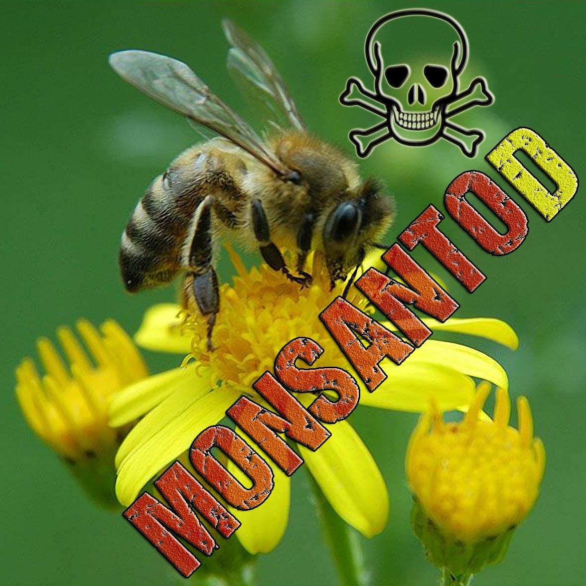 Müssen die Bienen in Europa den MONSANTO(D) sterben MonsantoD Bienen Sterben Honig Imker Verlust Gen Mais Pollen qpress