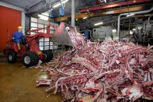 Der alltägliche Wahnsinn, Konsum-Enten Jagd, Fischfleisch und Volksverblödung Separatorenfleisch-erlesene-Reste-fuer-die-Allgemeinheit-nur-das-Beste-Fleischindustrie-Gammelfleisch