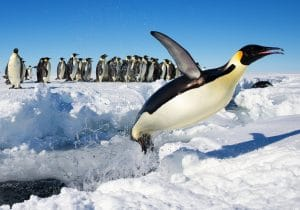 Obama erklärt Pinguine und Amerikaner zur Bedrohung für die nationale Sicherheit In der Antarktis startender Marschlug Pinguin auf den Weg in die USA bedrohung der nationalen Sicherheit