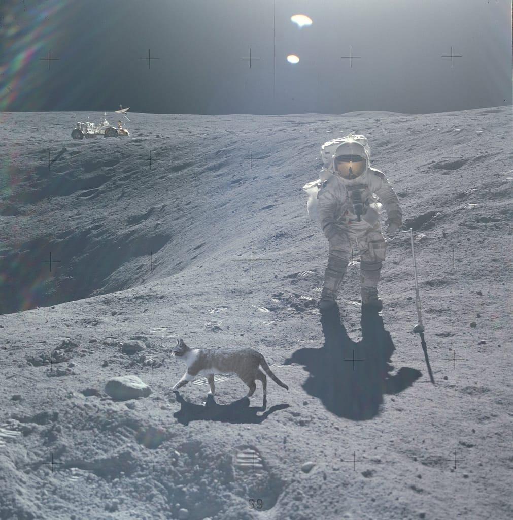 Sonne Mond und Katze Mondlandung Hoax USA Fake NASA NSA Beweismittelvernichtung