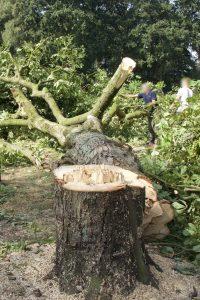 Mein Freund der Baum … wird für 5G gekillt