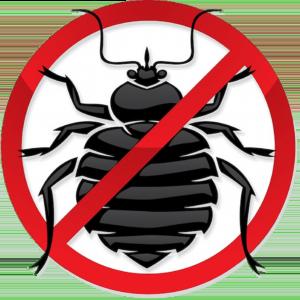Insekten erfolgreicher mit Mobilfunk töten